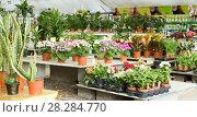 Купить «Photo of rows with colorful blooming plants», фото № 28284770, снято 23 февраля 2018 г. (c) Яков Филимонов / Фотобанк Лори