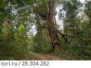 Купить «Дорога в джунглях. Индия, штат Аруначал Прадеш», фото № 28304282, снято 21 марта 2018 г. (c) Ирина Яровая / Фотобанк Лори