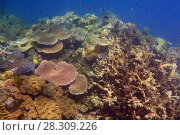 Купить «Coral formations, The Great Barrier Reef, Queensland, Australia», фото № 28309226, снято 26 марта 2019 г. (c) BE&W Photo / Фотобанк Лори