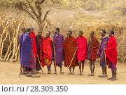 Купить «Massai group with traditional clothing in Masai Mara, Kenya», фото № 28309350, снято 20 мая 2019 г. (c) BE&W Photo / Фотобанк Лори