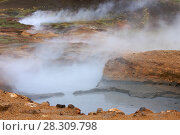 Купить «Hot springs at Hveragerdi, Iceland, September 2009. Photographed for the Freshwater Project.», фото № 28309798, снято 16 июля 2018 г. (c) Nature Picture Library / Фотобанк Лори