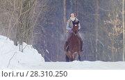 Купить «Young woman galloping on snowly outdoor on red horse - telephoto shot», фото № 28310250, снято 26 апреля 2018 г. (c) Константин Шишкин / Фотобанк Лори