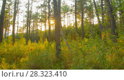 Купить «Panoramic Summer forest sunset rotation timelapse», видеоролик № 28323410, снято 30 сентября 2017 г. (c) Кирилл Трифонов / Фотобанк Лори