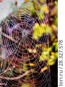Паутина с каплями росы. Стоковое фото, фотограф Акиньшин Владимир / Фотобанк Лори
