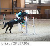 Купить «Young woman on the black stallion jumping over hurdle at show jumping competition», фото № 28337962, снято 24 апреля 2018 г. (c) Константин Шишкин / Фотобанк Лори