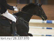 Купить «Young rider sitting on black horse at the show jumping competition», фото № 28337970, снято 24 апреля 2018 г. (c) Константин Шишкин / Фотобанк Лори