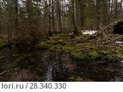 Купить «Forest stream among mossy shores in early spring during the melting of snow», фото № 28340330, снято 24 апреля 2018 г. (c) Евгений Харитонов / Фотобанк Лори