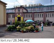 Сытный рынок, Санкт-Петербург. Продажа цветов и семян (2017 год). Редакционное фото, фотограф Светлана Колобова / Фотобанк Лори