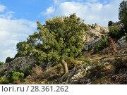 Anatolia scenery, Turkey (2009 год). Стоковое фото, фотограф Знаменский Олег / Фотобанк Лори