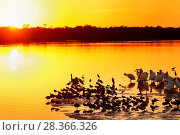 Sunset at Ding Darling Wildlife Refuge on Sanibel island, Florida, United States of America, North America. Стоковое фото, фотограф Don Mammoser / age Fotostock / Фотобанк Лори