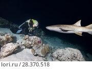 Купить «Female scuba diver looks at shark in the night. Tawny nurse shark, Giant sleepy shark or Madame X (Nebrius ferrugineus)», фото № 28370518, снято 2 апреля 2018 г. (c) Некрасов Андрей / Фотобанк Лори