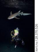 Купить «Female scuba diver and shark in the night. Tawny nurse shark, Giant sleepy shark or Madame X (Nebrius ferrugineus)», фото № 28370526, снято 2 апреля 2018 г. (c) Некрасов Андрей / Фотобанк Лори