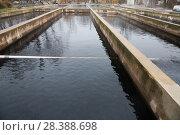 Купить «Opened reservoirs of fish farm», фото № 28388698, снято 4 февраля 2018 г. (c) Яков Филимонов / Фотобанк Лори