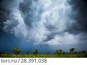 Купить «Storm clouds over Western Australia, December 2013.», фото № 28391038, снято 20 марта 2019 г. (c) Nature Picture Library / Фотобанк Лори