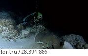 Купить «Young beautiful woman scuba diver look at stingray at night. Pink whipray (Himantura fai), Indian Ocean, Maldives», видеоролик № 28391886, снято 25 марта 2018 г. (c) Некрасов Андрей / Фотобанк Лори