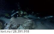 Купить «Young beautiful woman scuba diver look at shark and rays at night. Tawny nurse sharks (Nebrius ferrugineus) and Pink whipray (Himantura fai), Indian Ocean, Maldives», видеоролик № 28391918, снято 25 марта 2018 г. (c) Некрасов Андрей / Фотобанк Лори