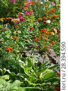 Купить «Садовые цветы на дачном участке», фото № 28394590, снято 21 августа 2017 г. (c) Елена Коромыслова / Фотобанк Лори