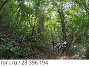 Купить «Bird watchers looking for Golden-headed Manakin on Nando's Trail at Canopy Camp in the Darien National Park UNESCO World Heritage Site, Panama.», фото № 28396194, снято 22 апреля 2019 г. (c) Nature Picture Library / Фотобанк Лори