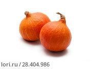 Купить «Colorful pumpkin and squash, Red Kuri, Kabocha,», фото № 28404986, снято 19 октября 2017 г. (c) Сурикова Ирина / Фотобанк Лори