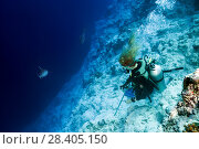 Купить «Female scuba diver looks at a Tiger Shark (Galeocerdo cuvier)», фото № 28405150, снято 13 марта 2018 г. (c) Некрасов Андрей / Фотобанк Лори