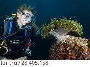 Купить «Female scuba diver looks at anemone. Magnificent Sea Anemone or Ritteri anemone (Heteractis magnifica)», фото № 28405158, снято 21 марта 2018 г. (c) Некрасов Андрей / Фотобанк Лори