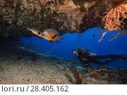 Купить «Female scuba diver looks at snapper in the cave. Midnight Snapper or Black and white snapper (Macolor macularis)», фото № 28405162, снято 25 марта 2018 г. (c) Некрасов Андрей / Фотобанк Лори
