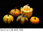 Купить «Colorful pumpkin and squash», фото № 28405186, снято 19 октября 2017 г. (c) Сурикова Ирина / Фотобанк Лори