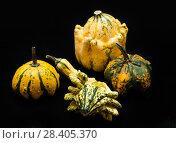 Купить «Colorful pumpkin and squash», фото № 28405370, снято 19 октября 2017 г. (c) Сурикова Ирина / Фотобанк Лори