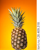 Купить «Big pineapple with stem on bright background», фото № 28409318, снято 22 декабря 2017 г. (c) Сергей Молодиков / Фотобанк Лори