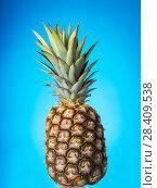 Купить «Large pineapple with green stem, on blue background», фото № 28409538, снято 22 декабря 2017 г. (c) Сергей Молодиков / Фотобанк Лори