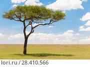 Купить «acacia tree in african savanna», фото № 28410566, снято 20 февраля 2017 г. (c) Syda Productions / Фотобанк Лори