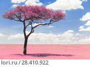 Купить «pink acacia tree in savanna with infrared effect», фото № 28410922, снято 20 февраля 2017 г. (c) Syda Productions / Фотобанк Лори