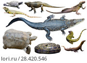 Купить «collection of reptiles», фото № 28420546, снято 20 октября 2019 г. (c) Яков Филимонов / Фотобанк Лори