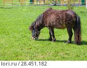 Купить «Мини лошадь пасется на зеленом травяном газоне в солнечный весенний день. Вокруг нее кружатся мелкие насекомые», фото № 28451182, снято 7 мая 2018 г. (c) Наталья Николаева / Фотобанк Лори