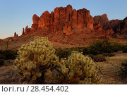 Купить «Superstition mountain and Teddy Bear cholla cactus (Opuntia bigelovii) at sunset, Lost Dutchman State Park, Arizona, USA, April.», фото № 28454402, снято 24 мая 2018 г. (c) Nature Picture Library / Фотобанк Лори