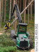 Купить «Timber harvesting machine felling and processing conifers, Inverness-shire, Scotland, August 2007», фото № 28459002, снято 22 сентября 2018 г. (c) Nature Picture Library / Фотобанк Лори