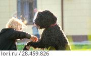Купить «A young girl combing hair on the legs of the dog, the flying dust, the sun is shining bright, summer day», видеоролик № 28459826, снято 23 июля 2018 г. (c) Константин Шишкин / Фотобанк Лори