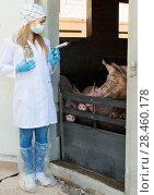 Купить «Female veterinarian in mask holding syringe», фото № 28460178, снято 20 июля 2018 г. (c) Яков Филимонов / Фотобанк Лори