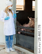 Купить «Female veterinarian in mask holding syringe», фото № 28460178, снято 23 марта 2019 г. (c) Яков Филимонов / Фотобанк Лори
