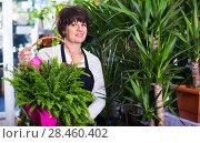 Купить «Woman seller demonstrating colorful basket with decorative fern», фото № 28460402, снято 8 ноября 2016 г. (c) Яков Филимонов / Фотобанк Лори