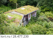 Купить «Turf roof on eco houses at the Centre for Alternative Technology in Machynlleth, Wales, UK, July,», фото № 28477230, снято 16 августа 2018 г. (c) Nature Picture Library / Фотобанк Лори