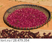 Купить «Close-up of red beans and spices drying in sunlight, Chiang Rai, Thailand», фото № 28479354, снято 25 июня 2018 г. (c) Ingram Publishing / Фотобанк Лори