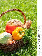 Купить «A harvest of season vegetables and bread in a wicker basket on green grass at garden», фото № 28484158, снято 14 июля 2013 г. (c) Ingram Publishing / Фотобанк Лори
