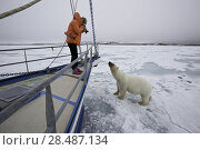 Купить «Polar bear (Ursus maritimus) approaching boat with curiosity, with photographer taking picture,  Spitsbergen, Svalbard, Norway, Arctic Ocean.», фото № 28487134, снято 30 марта 2020 г. (c) Nature Picture Library / Фотобанк Лори