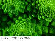 Купить «Romanesco broccoli cabbage marco. Nature fractal surface with spital pattern.», фото № 28492206, снято 26 мая 2019 г. (c) Ingram Publishing / Фотобанк Лори