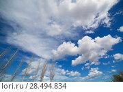 Купить «Blue dramatic sky in winter with leafless poplar tree branches», фото № 28494834, снято 10 марта 2013 г. (c) Ingram Publishing / Фотобанк Лори