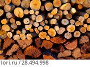 Купить «Firewood stacked fire wood with different sizes», фото № 28494998, снято 2 февраля 2013 г. (c) Ingram Publishing / Фотобанк Лори