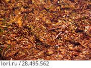 Купить «Menorca Posidonia algae dried on shore texture pattern», фото № 28495562, снято 25 мая 2013 г. (c) Ingram Publishing / Фотобанк Лори