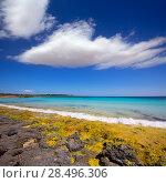 Купить «Menorca Son Saura beach in Ciutadella turquoise color at Balearic islands», фото № 28496306, снято 25 мая 2013 г. (c) Ingram Publishing / Фотобанк Лори