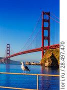 Купить «San Francisco Golden Gate Bridge seagull California USA», фото № 28497470, снято 21 апреля 2013 г. (c) Ingram Publishing / Фотобанк Лори